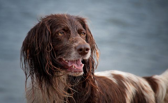 Hond in actie - Annemieke Slager
