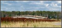 Schaapskudde Brabantse Biesbosch