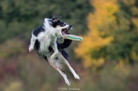 Dog in action1
