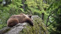 Relaxt