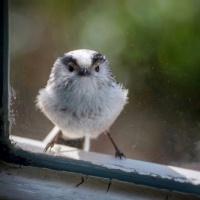 Laat mij erin!